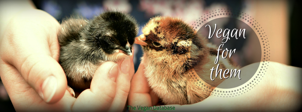 Facebook cover baby chicks