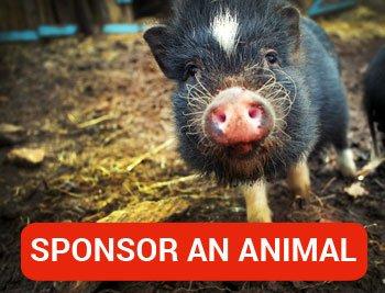 sponsor-an-animal